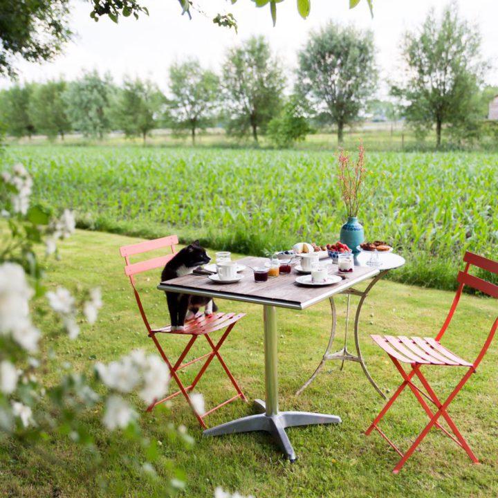 Bistrostoeltjes in het gras met ontbijt op tafel