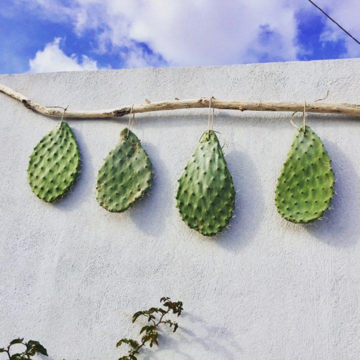 Cactus bladeren aan een tak op het dakterras