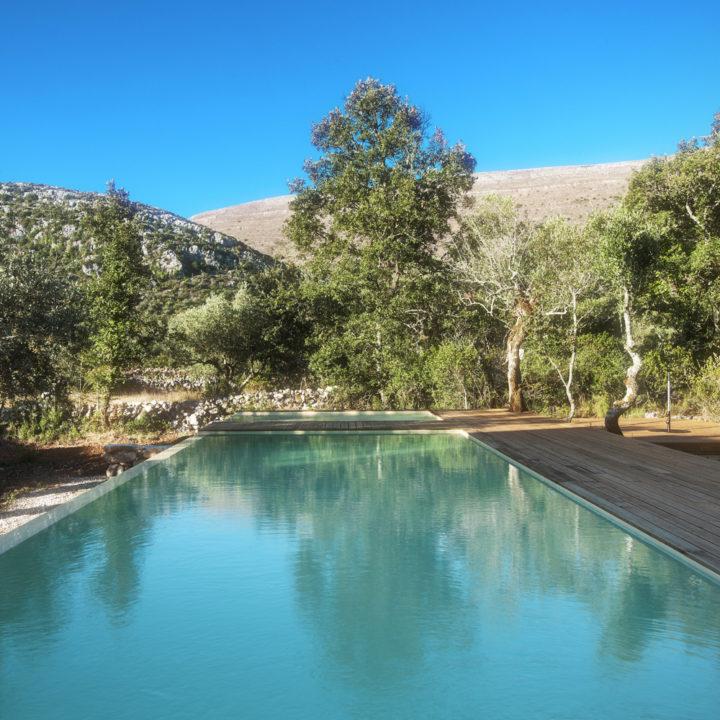 Het ruime zwembad omringd door groen.