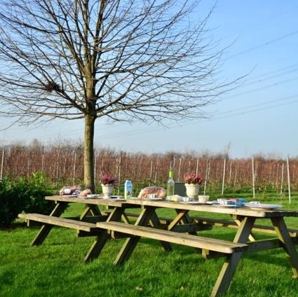 Op verzoek wordt er een diner in de wijngaard verzorgd