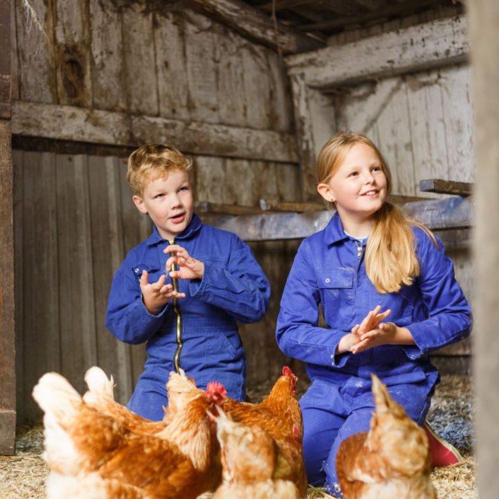 Kippen knuffelen op de boerderij in Twente