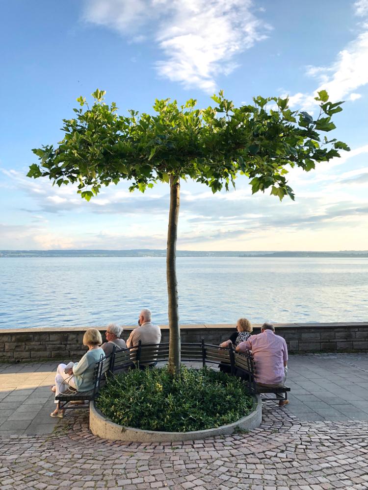 Twee mannen en 3 vrouwen zitten op een bankje naast een boom aan het water