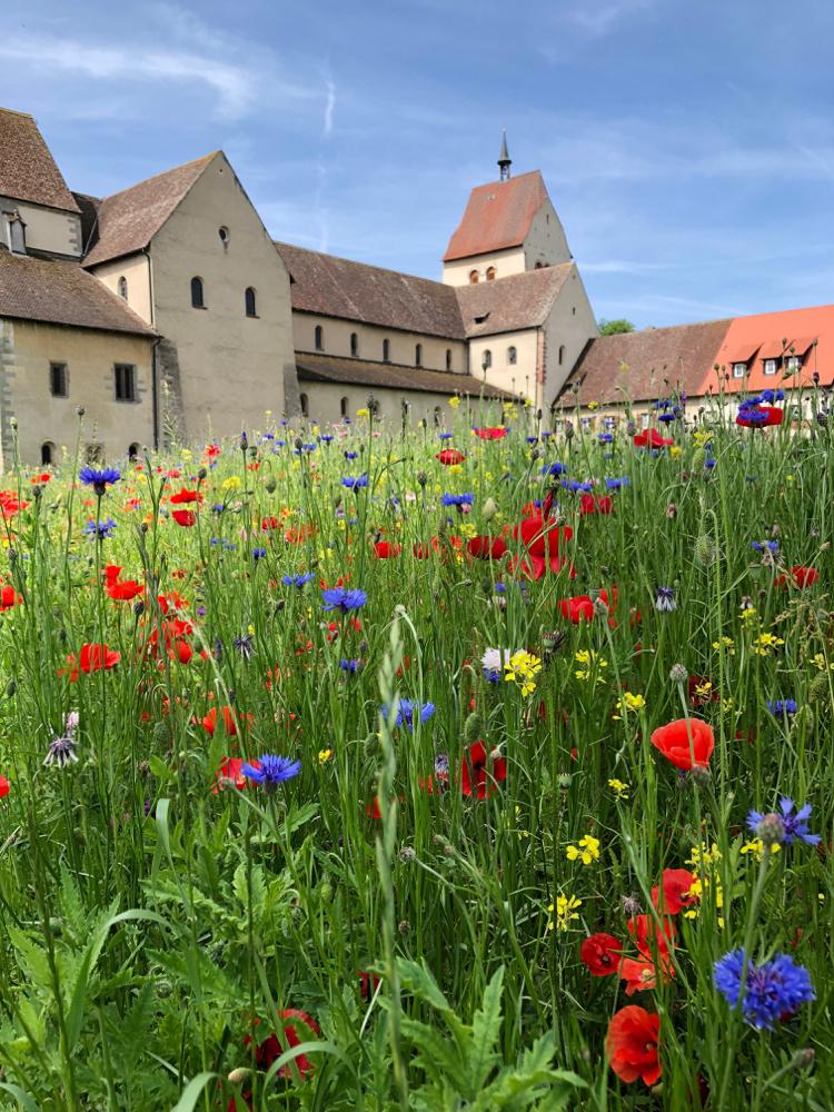 Kleurrijke bloemen bij een groot huis