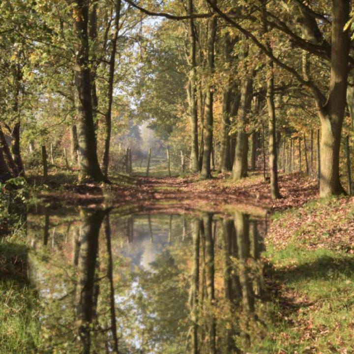 Vijver in bos met spiegeling