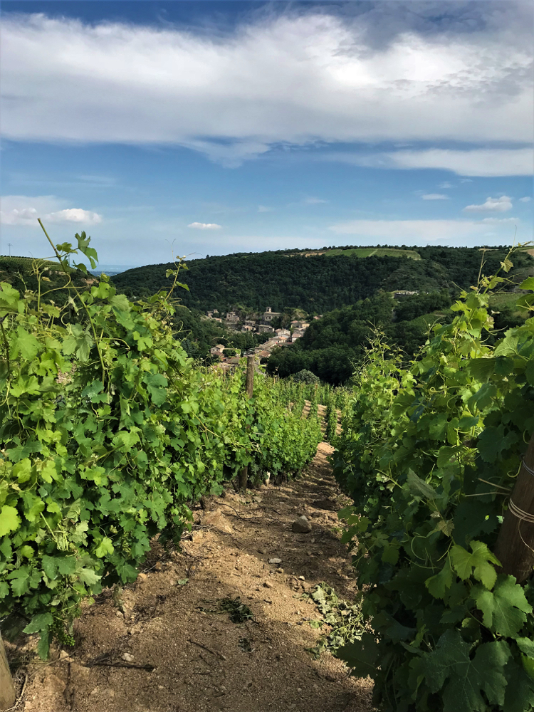 De wijngaarden in Parc du Pilat