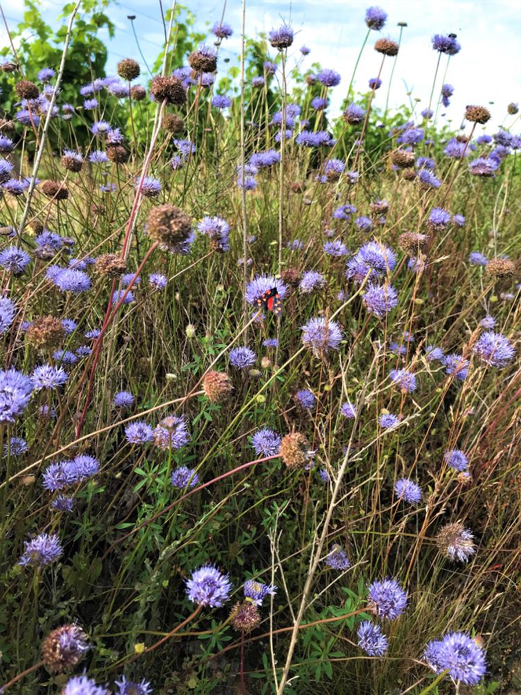 Foto bloemen 1