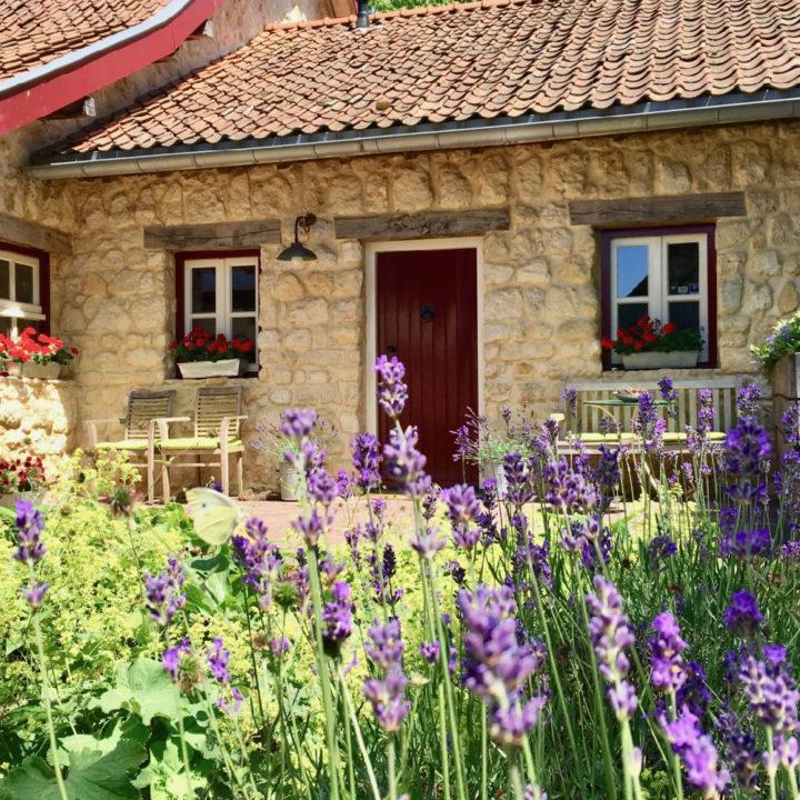 Lavendel in voortuin van Limburgs vakantiehuis