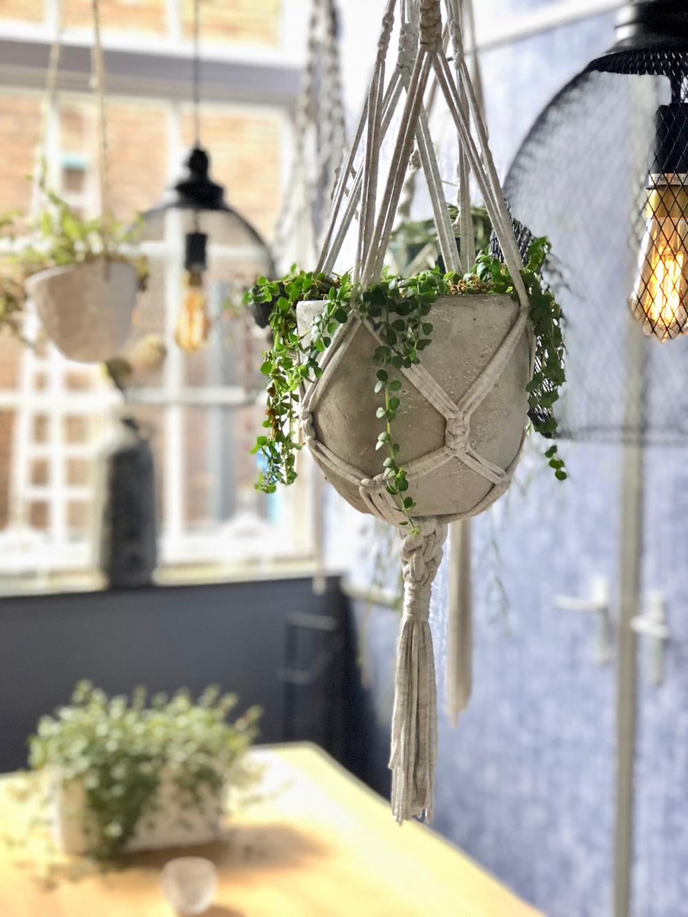 Planten aan het plafond in het restaurant
