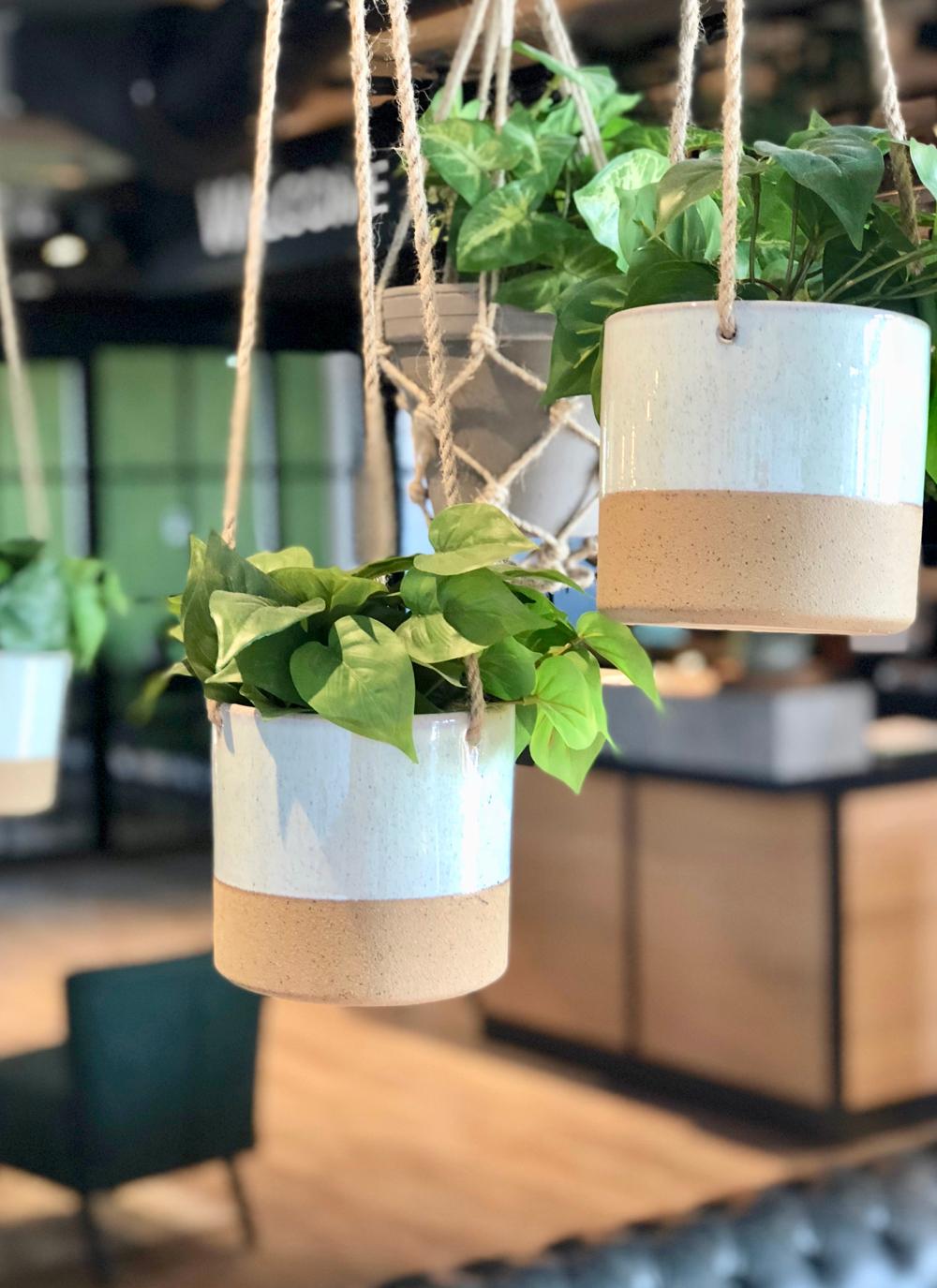 Hangplanten met op de achtergrond de receptie