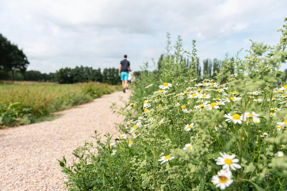 Wandelaar op het Bunkerpad met bloemen in de berm