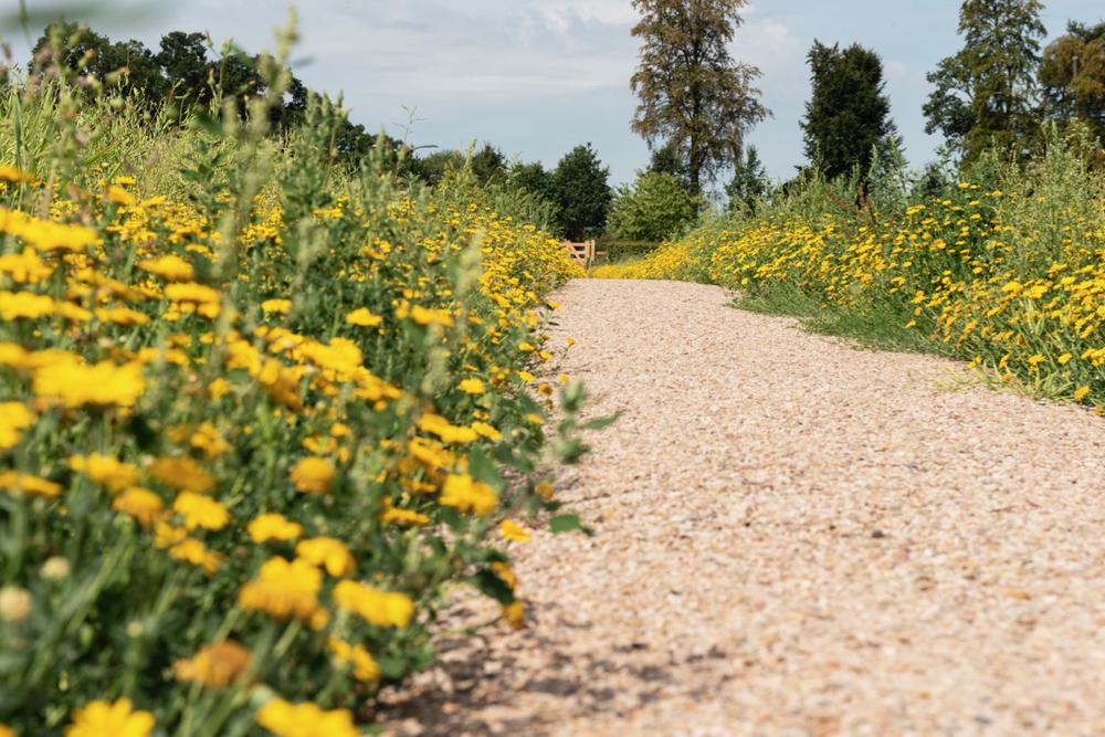 Wandelpad met grind en gele bloemen aan de zijkant