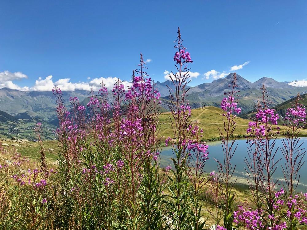 Roze bloemen met een bergmeertje en hoge bergtoppen