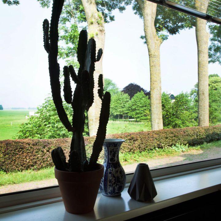 Vensterbank met vaasjes en een cactus en uitzicht over de weilanden