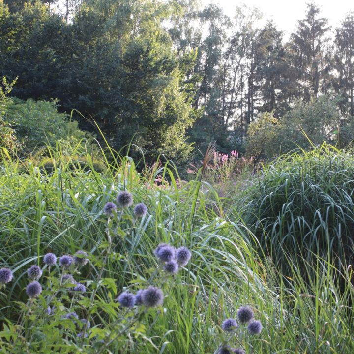 Grassen in de tuin van het vakantiehuis