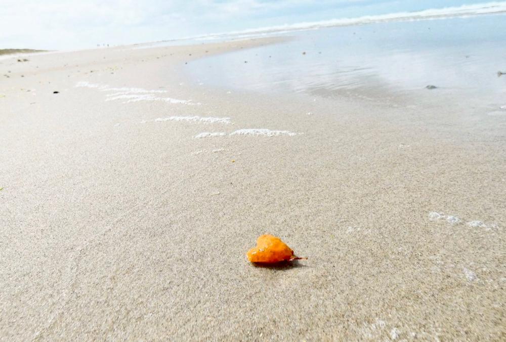 Liefde voor Vlieland, favoriet Waddeneiland. Een hartje op het strand.
