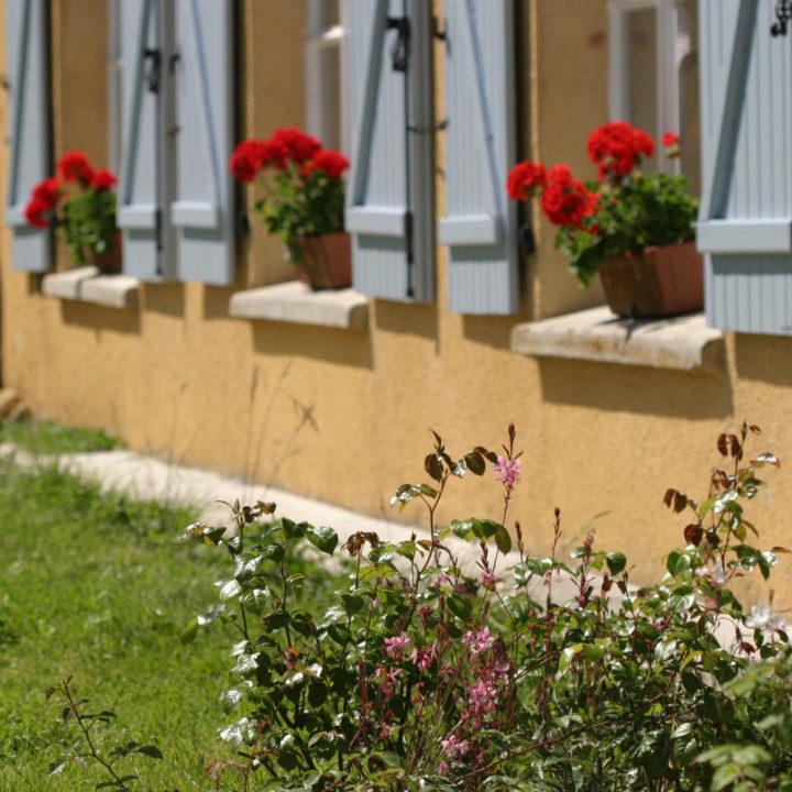 Gele gevel met blauwe luiken en bakken met rode geraniums