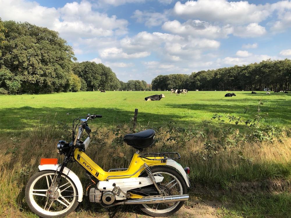 Gele Puch aan de rand van het weiland vol koeien