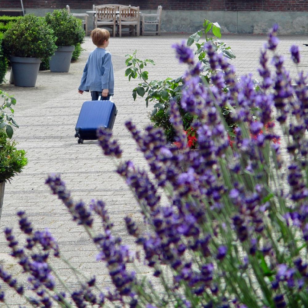 Een jongetje met koffertje op wieltjes, gezien tussen de lavendel door