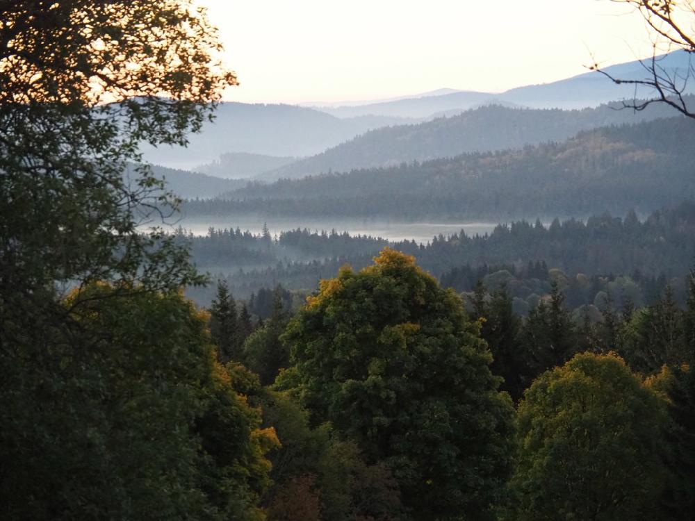 Glooiend landschap bij ochtendgloren met alleen maar bossen