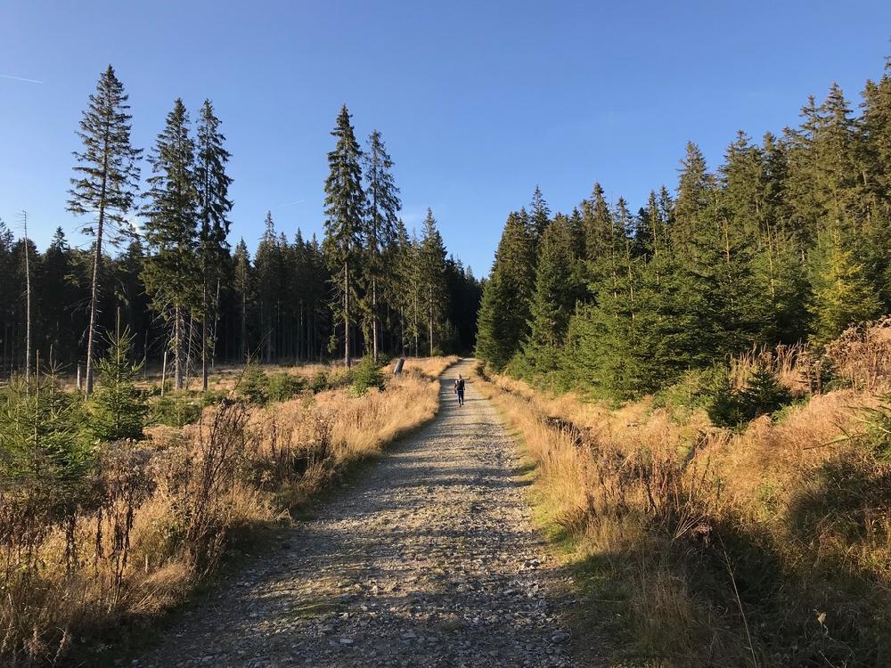 Wandelaar op gravel pad in een herfstbos