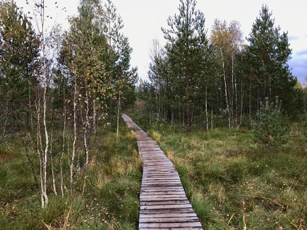 Uitgestrekte wandelpaden met houten vlonders