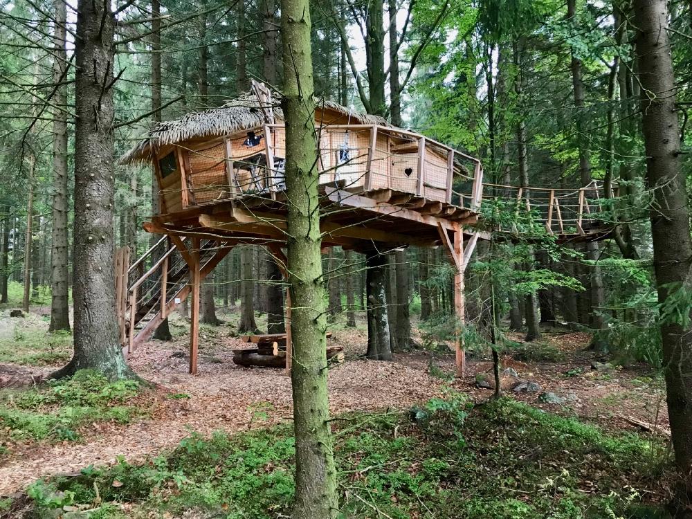 Boomhut in een dennenbos