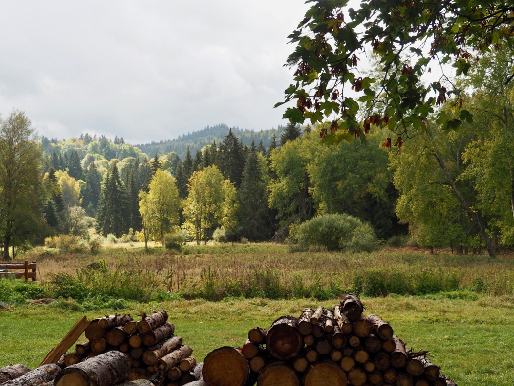 Boslandschap met stapels hout