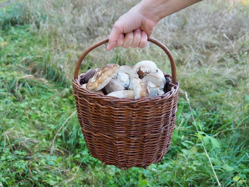 Een mandje met paddenstoelen die iemand vasthoudt