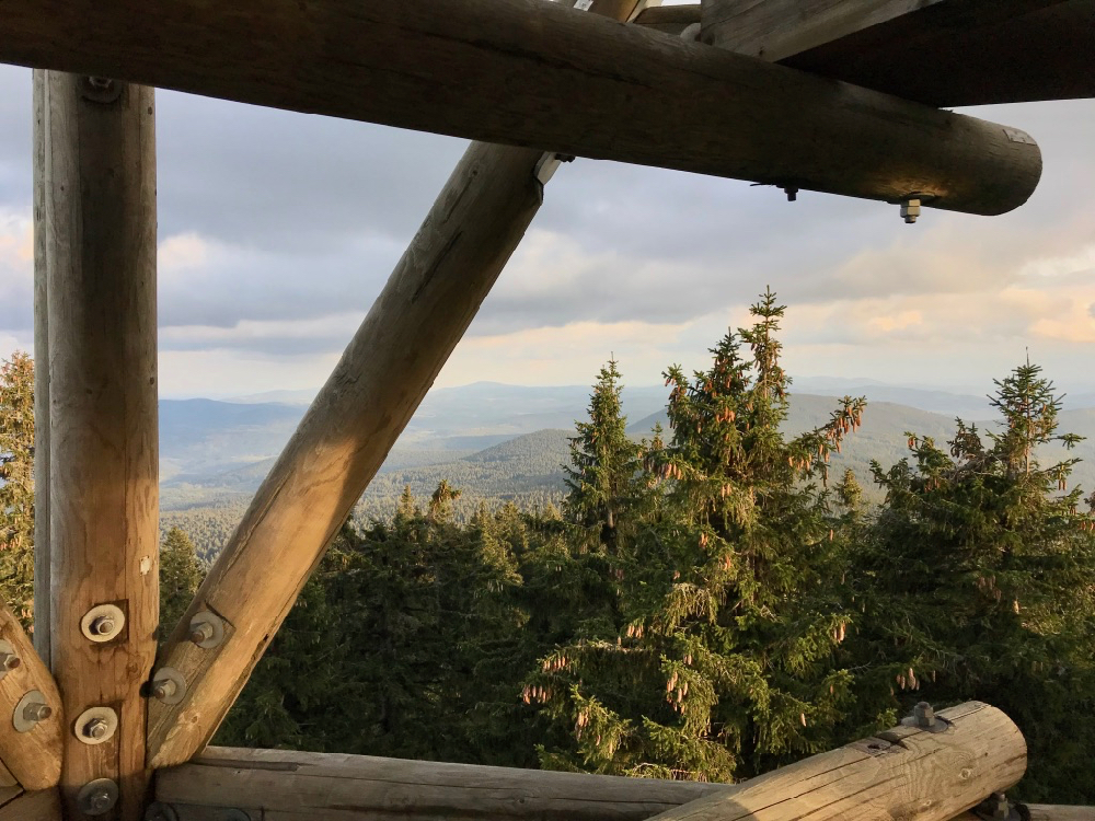 Uitkijktoren met uitzicht over de dennenbomen