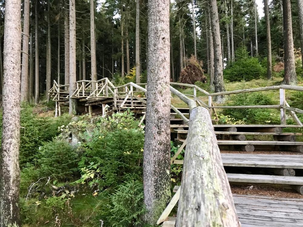 Wandelpaden en houten vlonders in Boubín oerbos