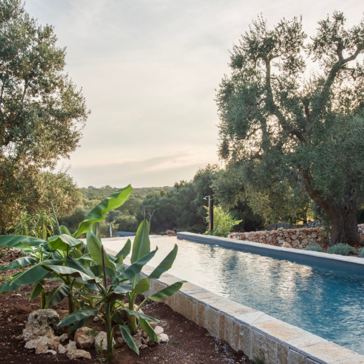Een zwembad met palmbomen en olijfbomen eromheen.