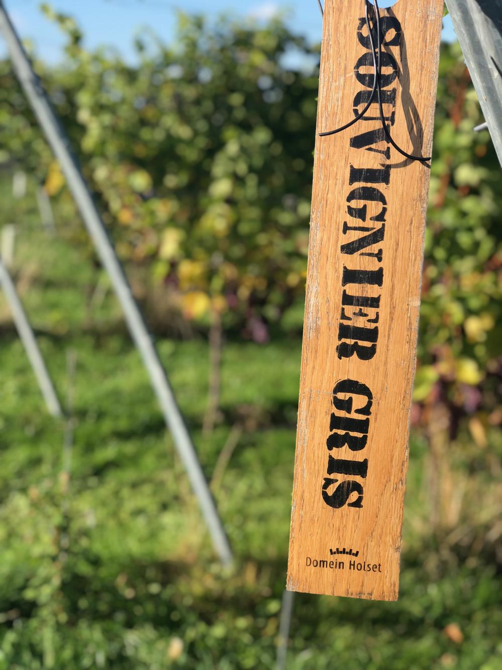 Druivenranken met een houten naambordje met de tekst Souvignier gris