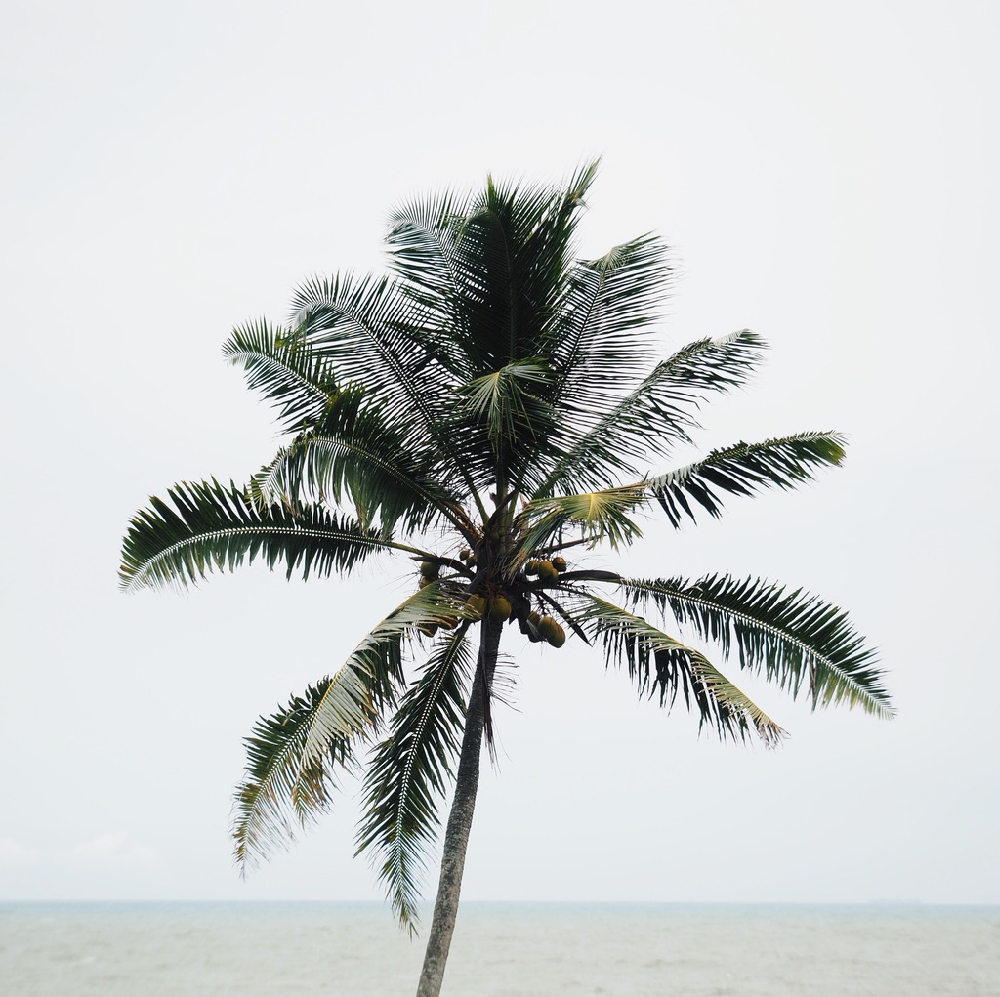 Een palmboom aan zee, uit het boek Feed your wanderlust