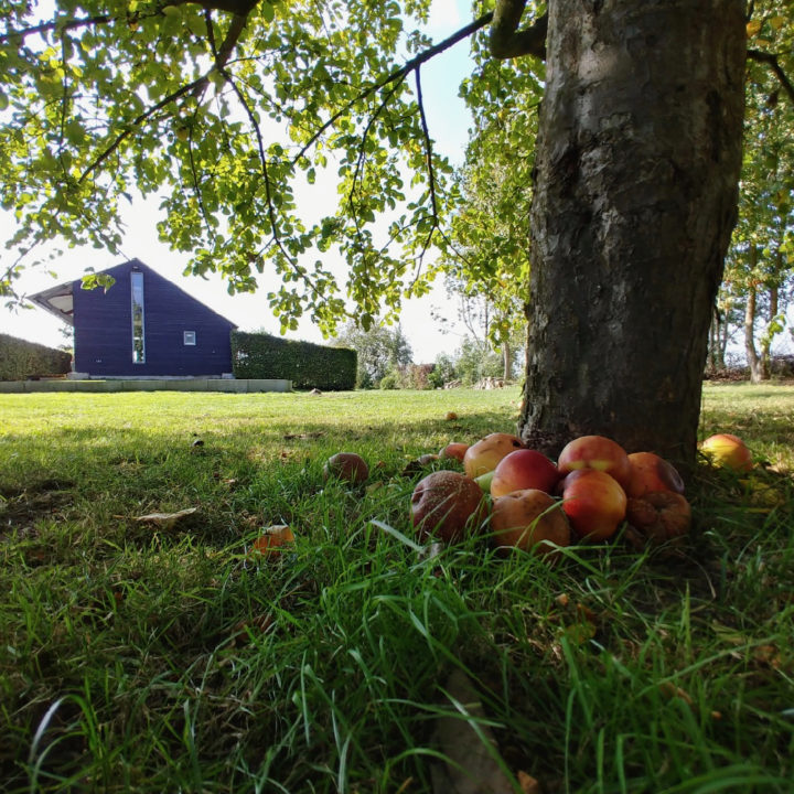 Appelboom met appeltjes op de grond en vakantiehuis op de achtergrond