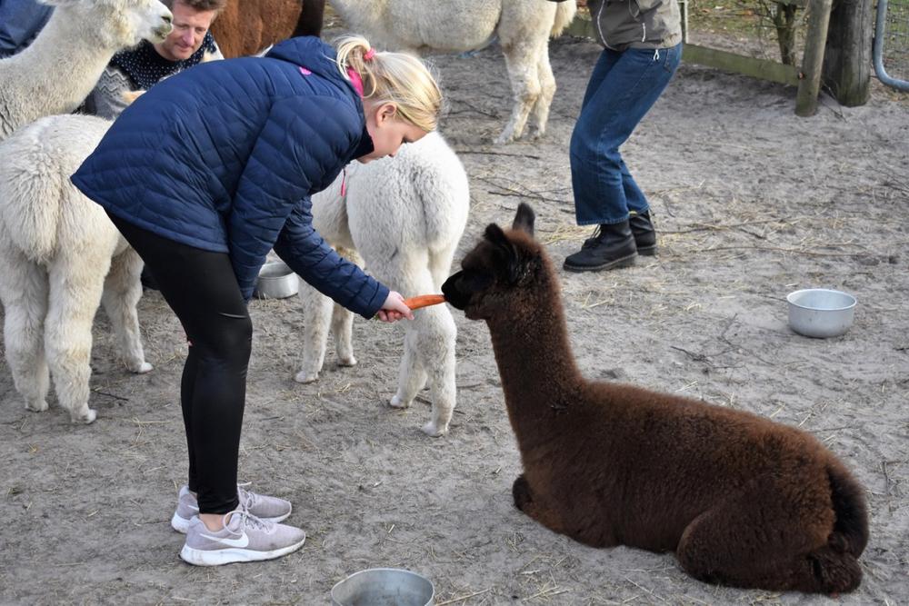 Een tiener met een blauwe jas geeft een Alpaca een wortel