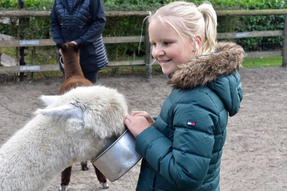 Meisje Jasmijn geeft een witte Alpaca te eten, met een grote glimlach op haar gezicht