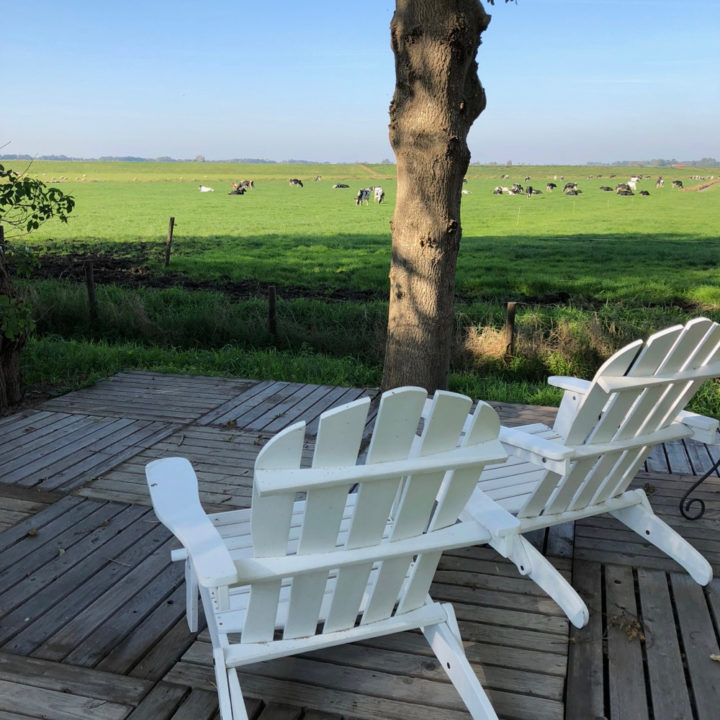 Een terras met twee witte beach chairs met uitzicht over een weiland met koeien