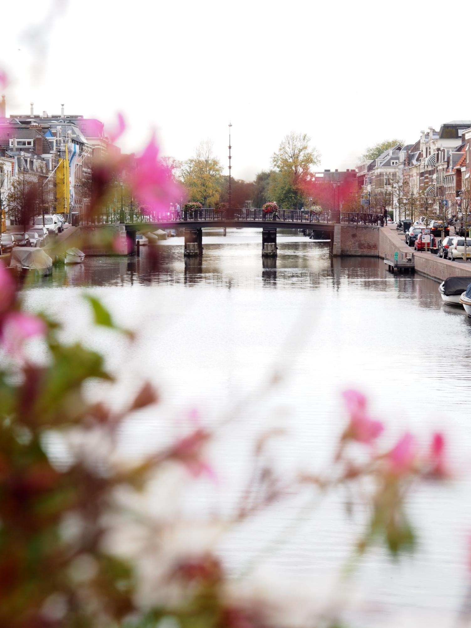 Bruggetjes en monumentale panden langs de gracht in Haarlem