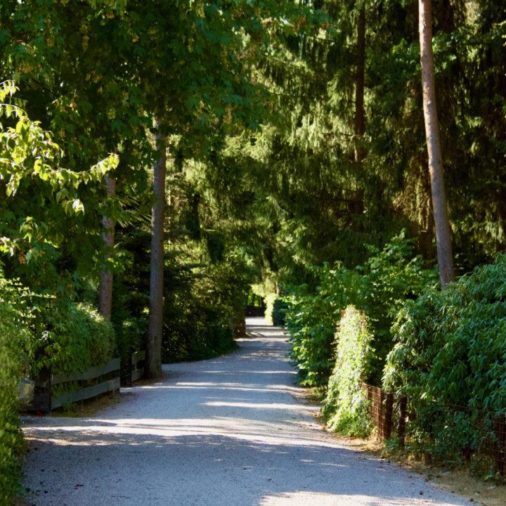Een bosweg door het vakantiepark