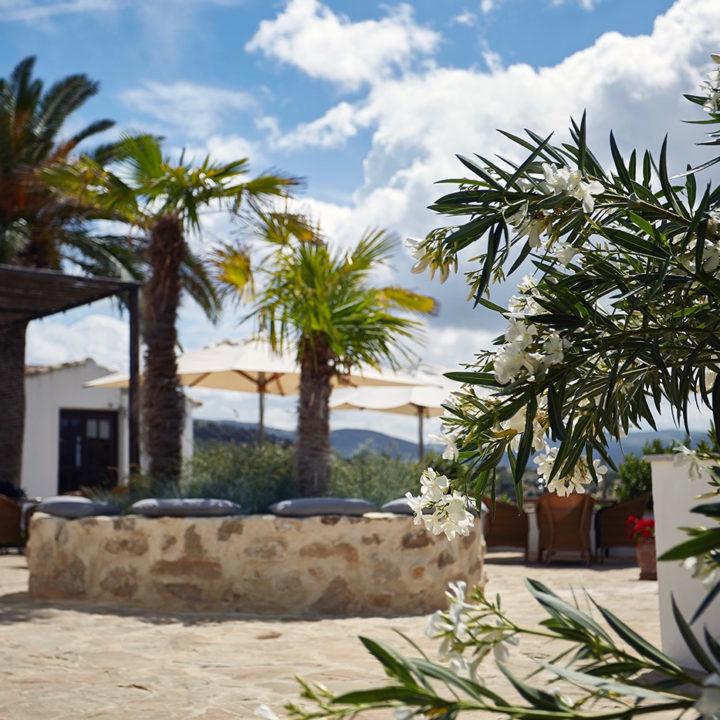 Binnenplaats met palmbolmen en Oleander