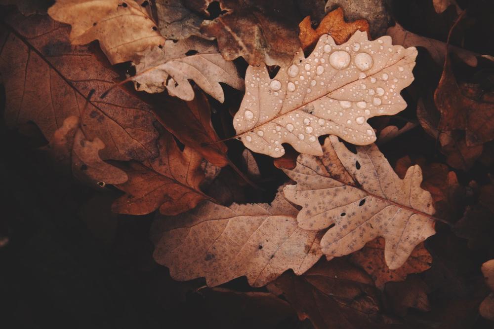 Bruine herfstbladeren met regendruppels erop