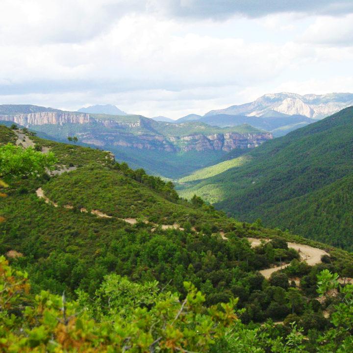 Slingerende landweg door berglandschap
