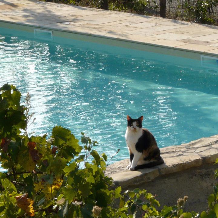 Poes aan de rand van een zwembad
