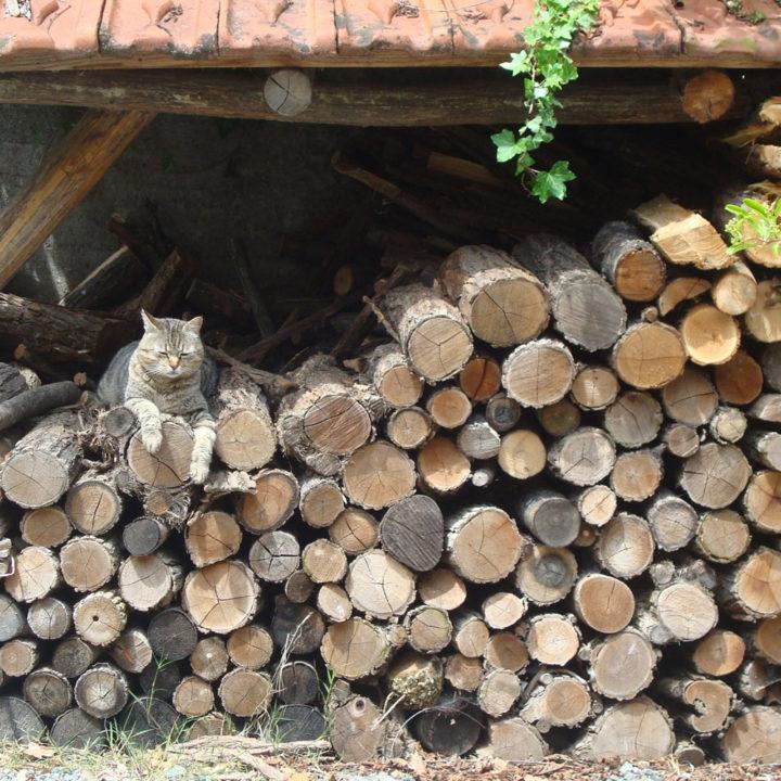 Schuurtje met houtblokken met een kat erop