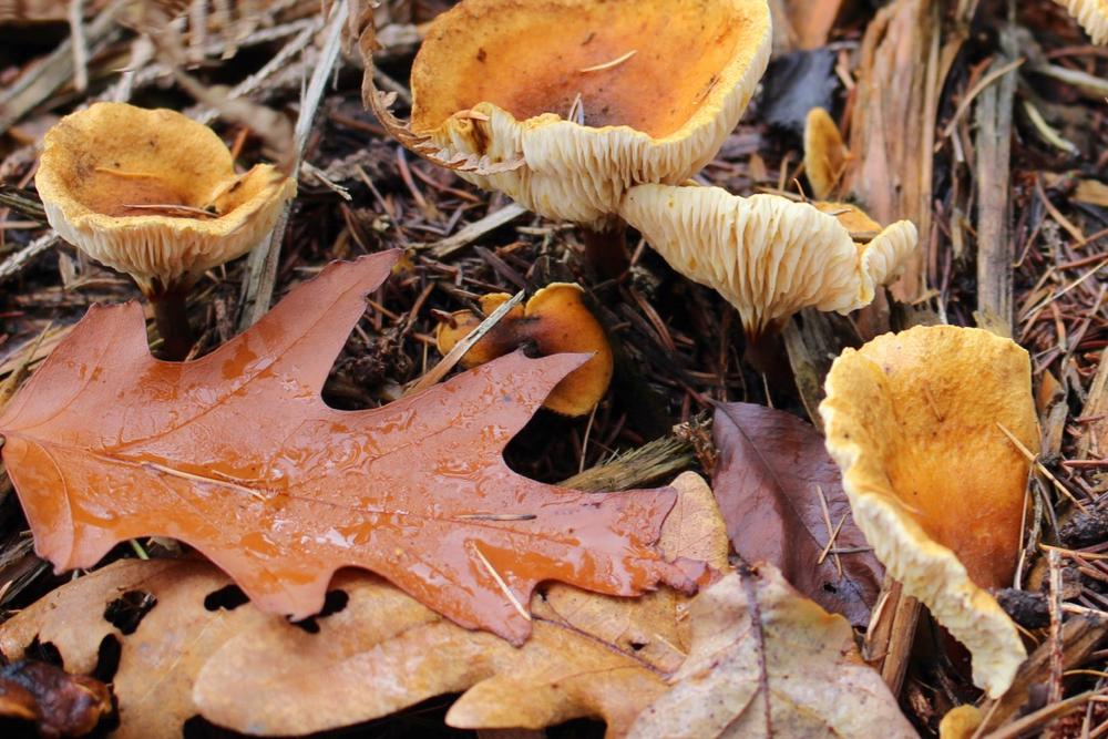Paddenstoelen en herfstbladeren