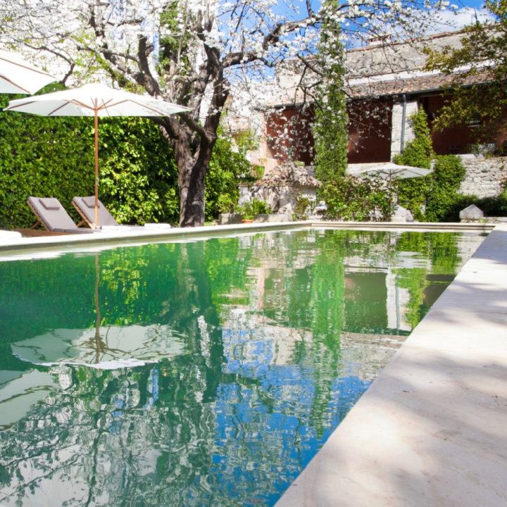 Zwembad met ligstoelen, een overhangende tak en zicht op de veranda