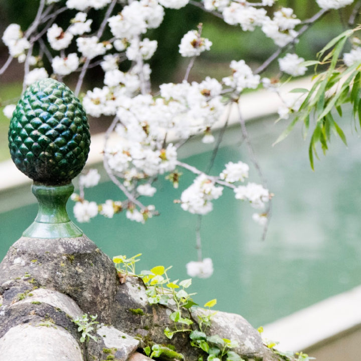 Close up van een zwembad, met bloeiende bloesem