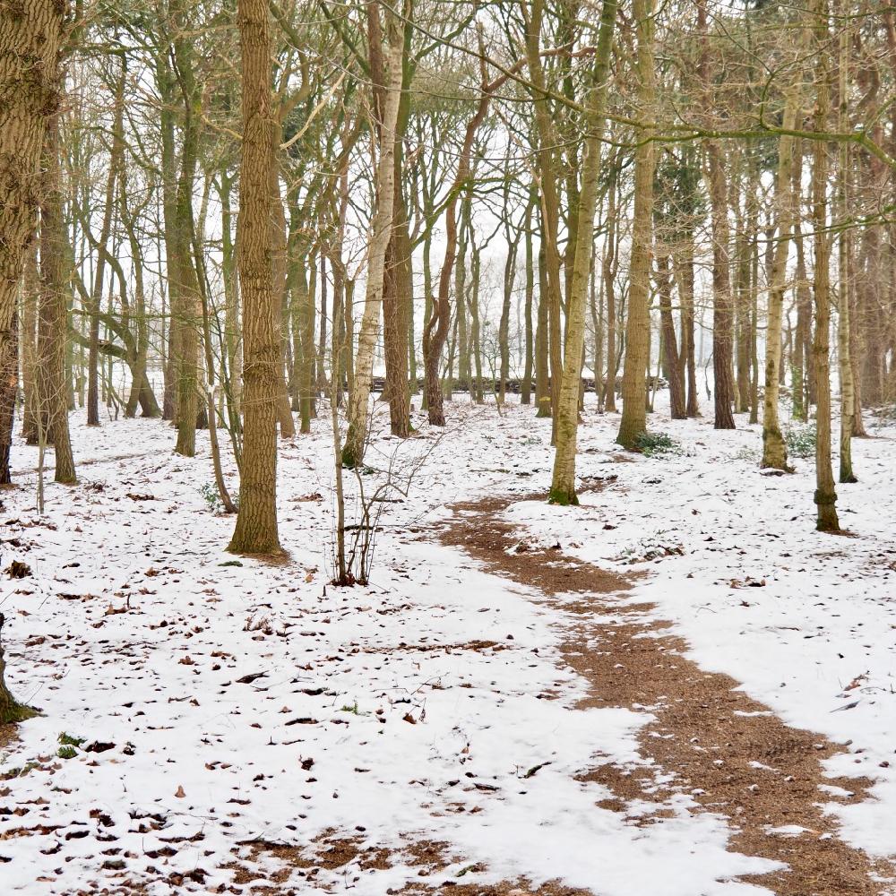 Een paadje bedekt met sneeuw slingert door een bos