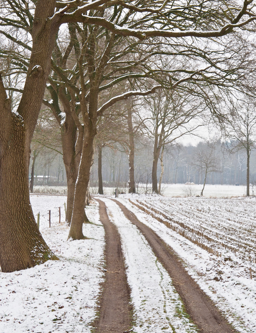 Lange oprijlaan met hoge bomen op het platteland, bedekt met een laagje sneeuw
