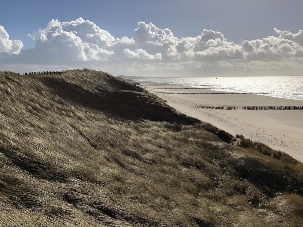 De wind waait door het helmgras op de duinen langs het strand in Walcheren